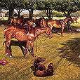 Polo at Tidworth  |  h.76cm w.101.5cm  |  Oil on board