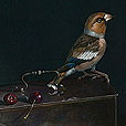 Hawfinch & Cherries  |  h.41cm w.51cm  |  Pastel on Board